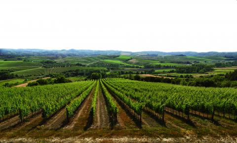 Villa Toscane wijnlandgoed