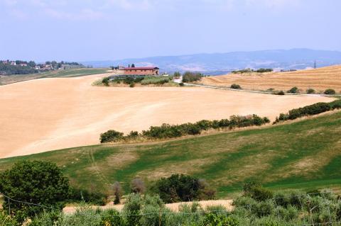 Uitzicht op graanvelden bij Volterra