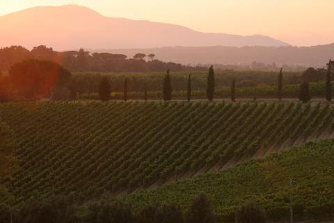 Uitzicht op de wijngaarden