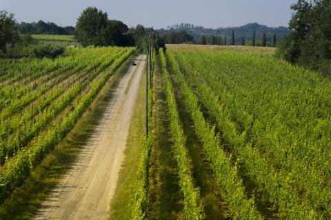 Productie van excellente wijnen