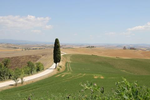 Landschap met cypres bij de villa