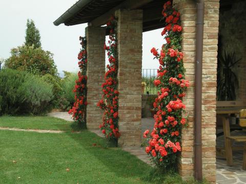 Vrijstaande villa voor 8 personen Toscane