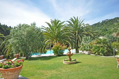 Garten mit wunderschönen Palmen
