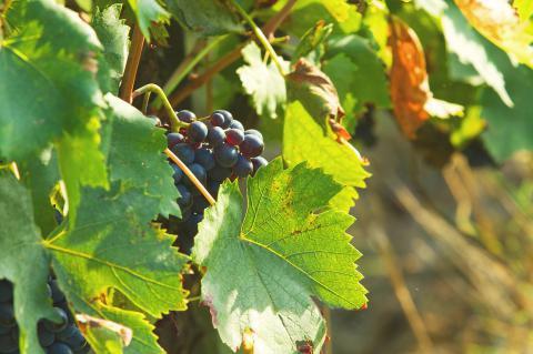 Wijnproevrij Toscane