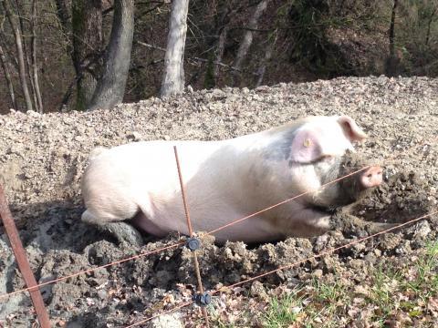 Agriturismo met diertjes