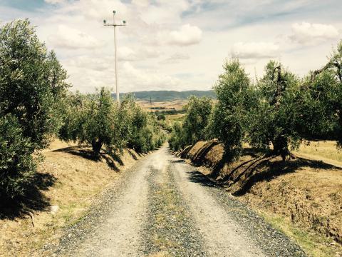 Vakantiehuizen kleinschalige agriturismo Toscane