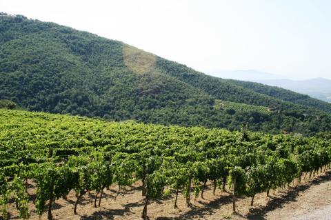 Agriturismo omringd door wijngaarden