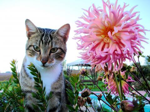 Eine der Hauskatzen