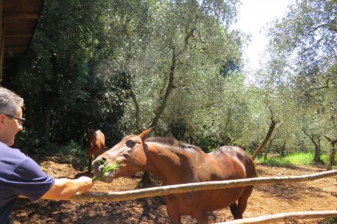 Agriturismo l'Antica Fattoria * * * Pisa, Toskana | tritt-toskana.de