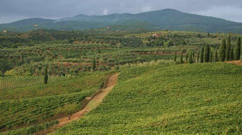het heuvellandschap van Toscane