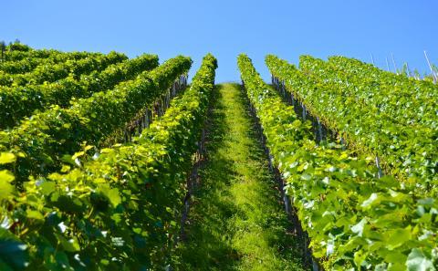 Wijnroute Toscane: Maremma, wijn uit schilderachtige wijngaarden