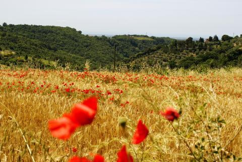 Voorjaarsvakantie Italië: Vier de lente in Toscane