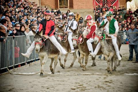 Vakantie Siena, racende ezels bij de Palio dei Somari in Torrita di Siena
