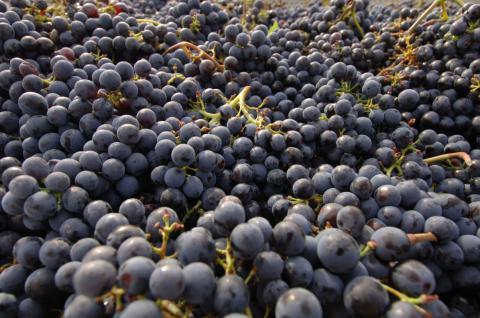 Toskanische Rotweine- Qualität statt Quantität