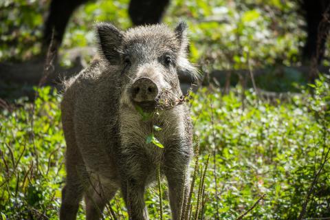 Wilde dieren in Toscane - welke kom je tegen tijdens je vakantie