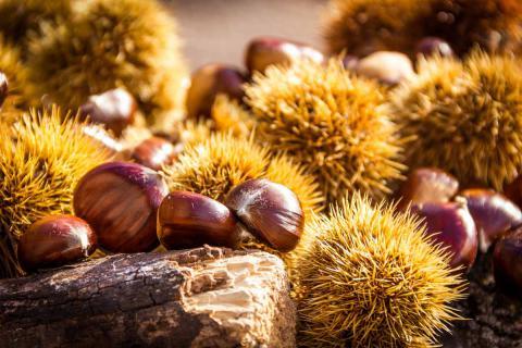 Gesunde Mittelmeer Küche, jetzt ist Kastanien-Zeit