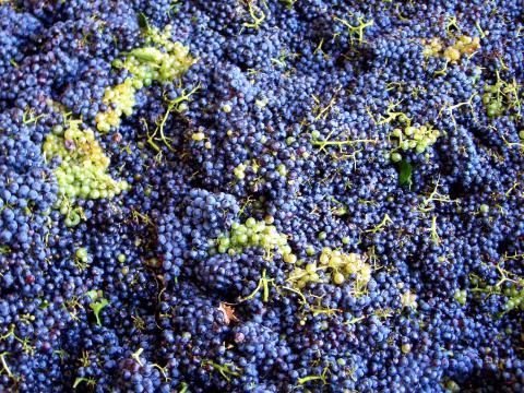 Wijnfestival in Toscane - Impruneta