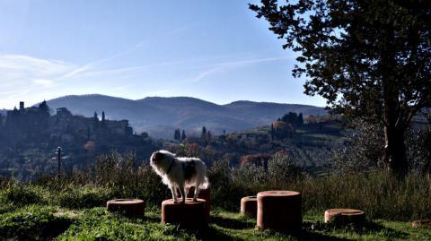 Wanderung mit oder ohne Hund im Chianti Gebiet