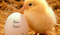 Pasqua perfetta: Vier Pasen in Italië